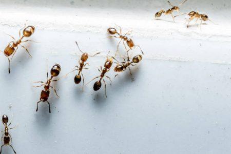 Τι να βάλετε σε πόρτες και παράθυρα του σπιτιού για να απωθήσετε τα μυρμήγκια